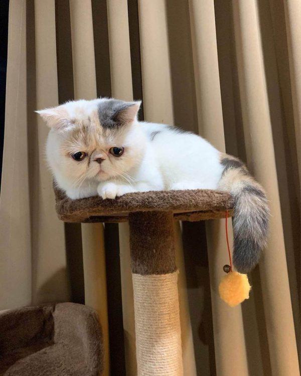 รูปวาด แมว อาร์ต ๆ khamla ต้นฉบับ